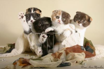 Кошки и котята [от 340 х 200 до 3890х2600, 758, JPG]